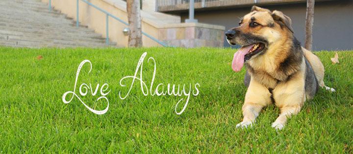 Chica Dog Love Always